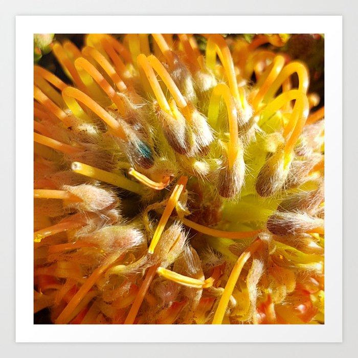 Pincushion Protea Yellow Art Print By Ellenhenryart