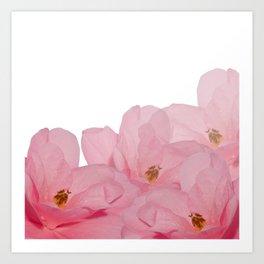 Pink Camelia Rose Art Print