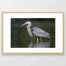 Pacific Great Blue Heron | Birds | Nature | Wildlife Photography Framed Art Print