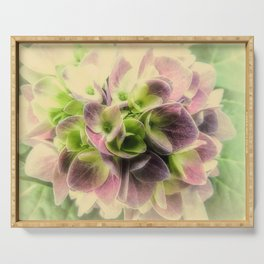 Soft Hydrangea Flower Modern Country Farmhouse Art A422 Serving Tray