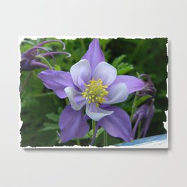 Columbine Flower 1 Metal Print