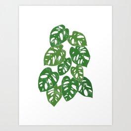 Monstera Adansonii Tropical Houseplant Hand-Painted Art Art Print