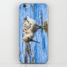 Black Necked Stilt Chick iPhone Skin