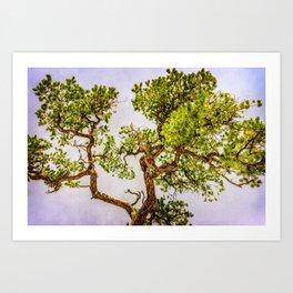 Curly Pine Art Print