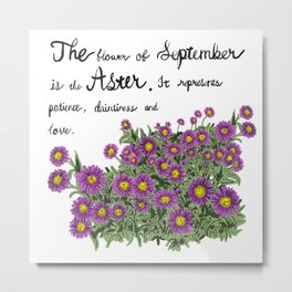 Aster - Birth Month Flower for September Metal Print