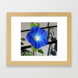 Bluer Than Blue Framed Art Print