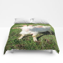 Billy 'The Goat' Comforters