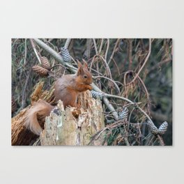 woodland delights Canvas Print