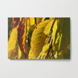 Yellow Leaves Metal Print
