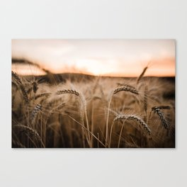 Sunset on the Palouse Canvas Print