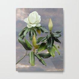 White Magnolia Tree Metal Print