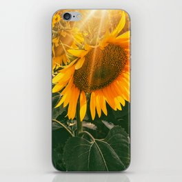 summer in the fields iPhone Skin