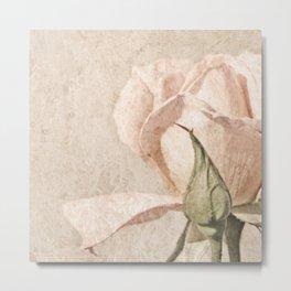 Vintage Pale Pink Rose Metal Print