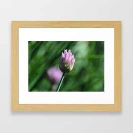 Purple chive flowers 2 Framed Art Print