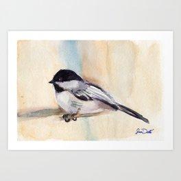 Chickadee Study Art Print