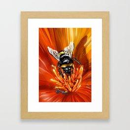 Bee on flower 1 Framed Art Print