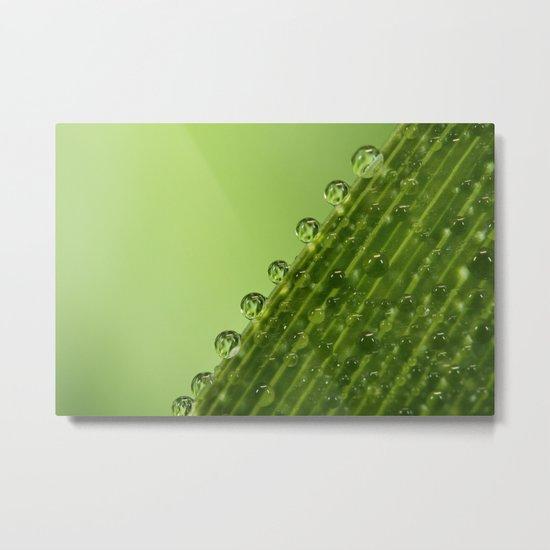 Fresh Green Dew Drops Metal Print