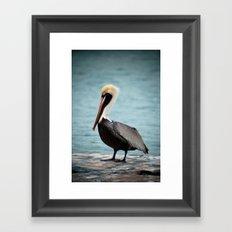 the pelican II Framed Art Print