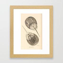 Horseshoe Crabs Framed Art Print
