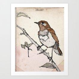 Nightingale | Watercolor Illustration Art Print