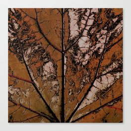 OLD BROWN LEAF WITH VEINS SHABBY CHIC DESIGN ART Canvas Print