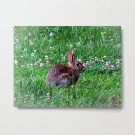 Bunny In The Meadow Metal Print