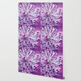 Allium Wallpaper