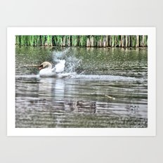 bathing swan Art Print