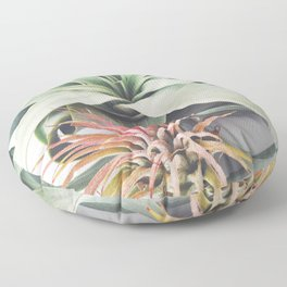 Air Plant Collection III Floor Pillow