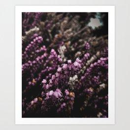 Wildflower Series - Te Anau Art Print