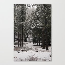 Carol Highsmith - Snow Covered Trees Canvas Print