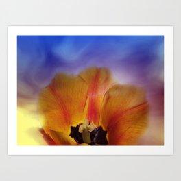 tulips in spring -2- Art Print