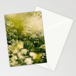 White flowers in the evening sun | Netherlands | floral art | nature photography | fine bokeh art | Stationery Cards