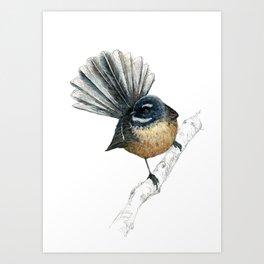Mr Pīwakawaka, New Zealand native bird fantail Art Print