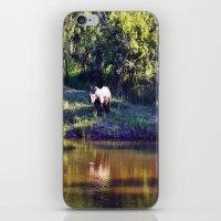 rhino iPhone & iPod Skins featuring Rhino  by Art-Motiva