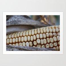 Corn of fall Art Print