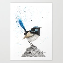 Mountain Blue Wren Art Print