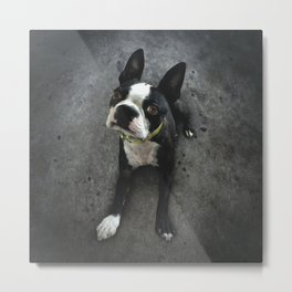 BOSCO (rescue pup) Metal Print