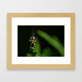 Damselfly Framed Art Print