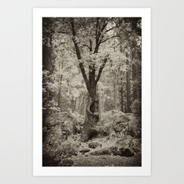 Old Oak Dark  Art Print