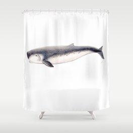 Pygmy sperm whale Shower Curtain