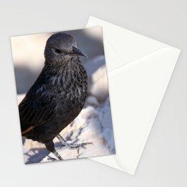 Tristram Starling Masada Stationery Cards