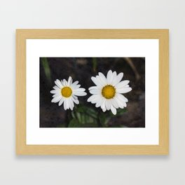 Old And Young Daisies Texture Framed Art Print