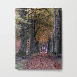 ROAD WITH FALLING LEAVES IN BETWEEN OF TREES Metal Print