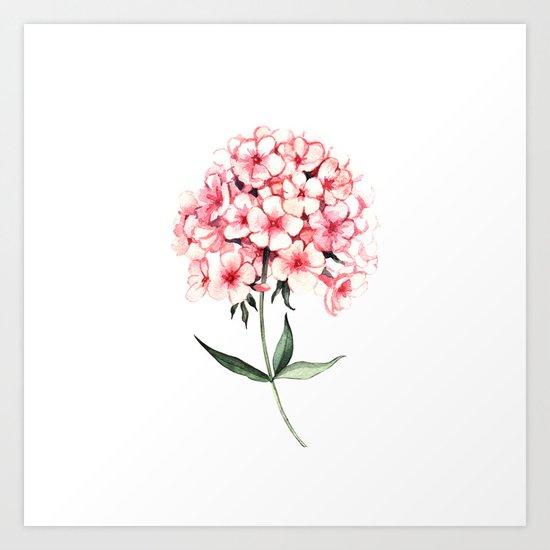 Watercolor flower phlox Art Print