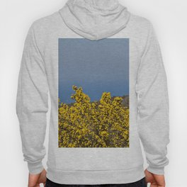 Landscape on mountain with blue sky Hoody