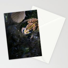 Common frog under sunlight on surface of water in marshes Stationery Cards
