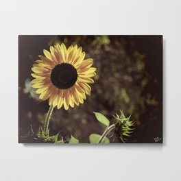 Sunflower Gaze Metal Print