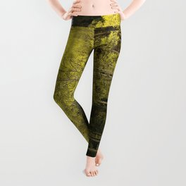 Where Love Grows Leggings