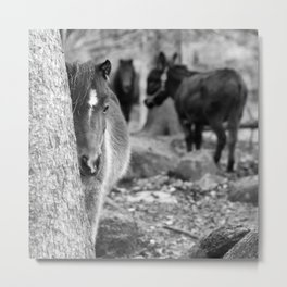 Poney and donkey Metal Print